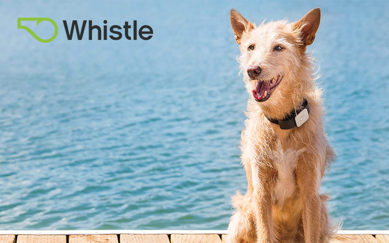 NPP Now Offers Whistle Pet Trackers